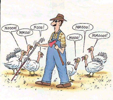 turkey moo!